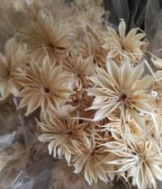 Dried Nigella-bleached