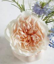 Rose Garden, Eugenie-SA