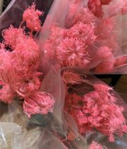 Dried Fennel Flower-pink