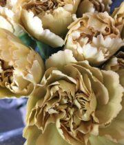 Carnations, Specialty-Mustard