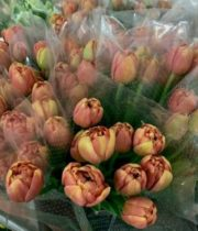 Tulips, Double-Copper Image