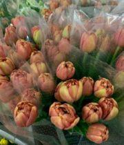 Tulips, Double-Copper Image