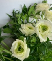 Ranunculus, Butterfly-white/cream