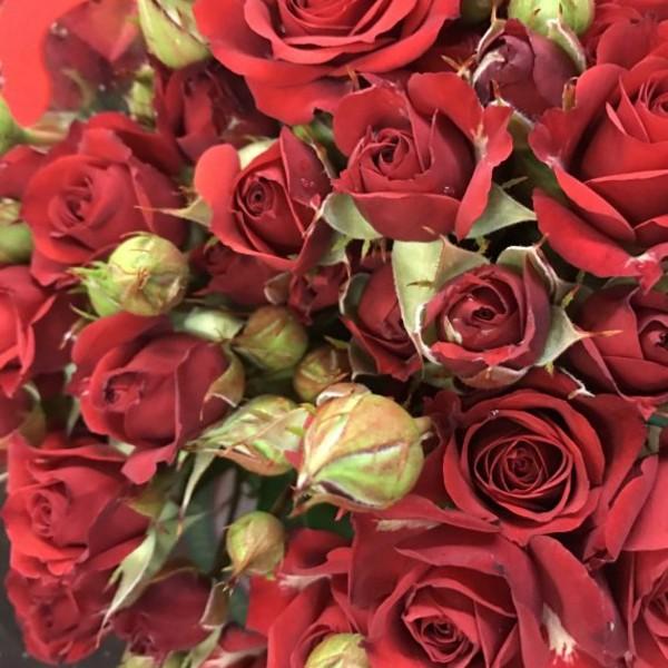 Mirabel Spray Rose