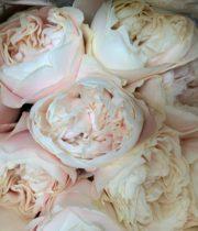 Rose Garden, Chiffon-CA