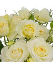Rose Garden Spray, Clair De Lune-CA