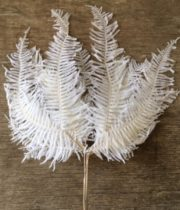 Dried Japanese Ostrich Feather-bleached