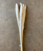 Dried Pampas Grass, Mini-bleached