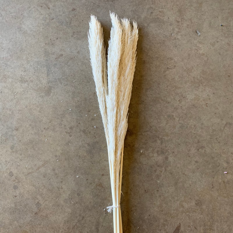 Dried Bleached mini pampas grass