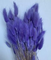Dried Bunny Tail Grass-amethyst