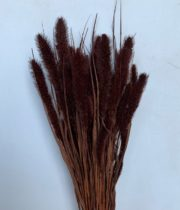Dried Millet-chocolate