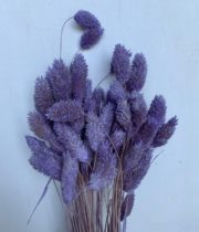 Dried Phalaris-amethyst