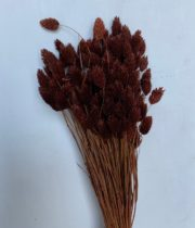 Dried Phalaris-chocolate