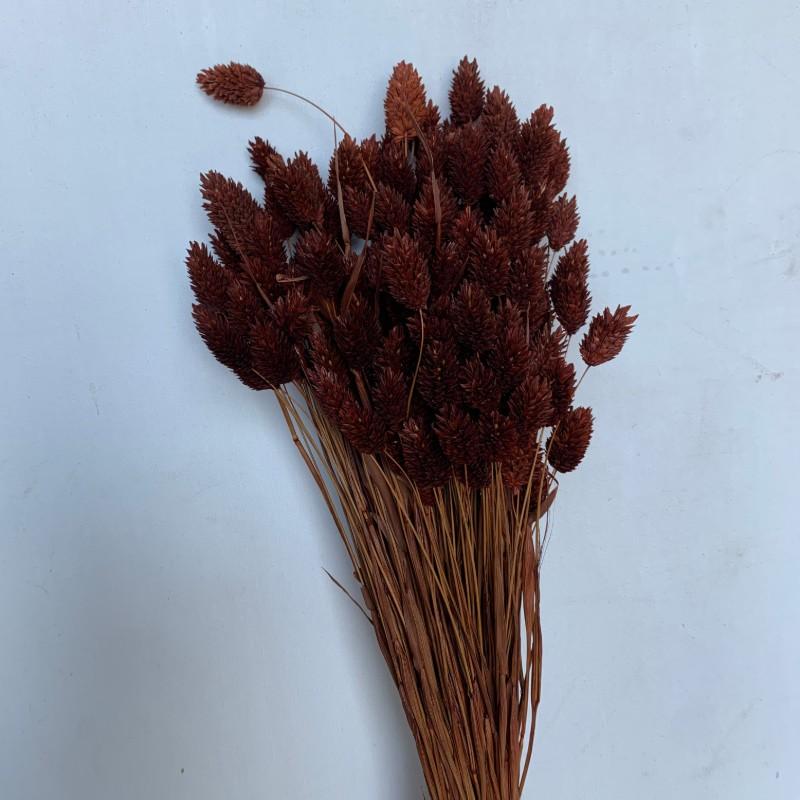 Dried Phalaris chocolate