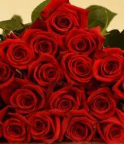 Rose, Finally-SA