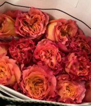 Rose, Free Spirit-SA