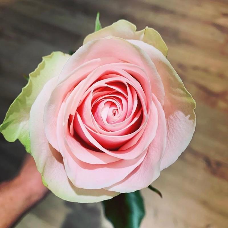 Frutetto Rose