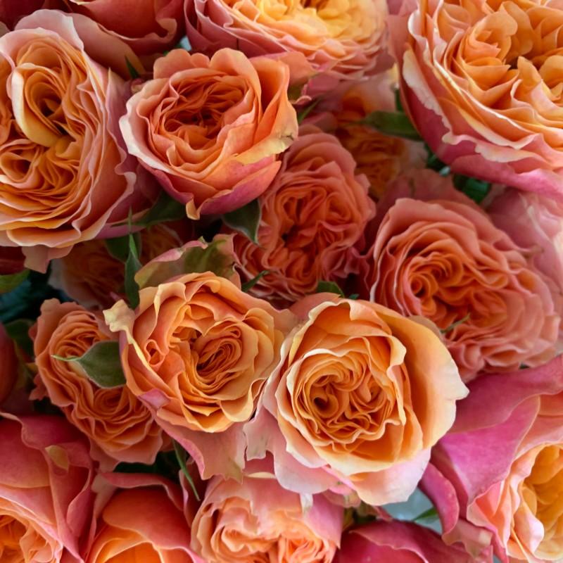 Orange Parasol Spray Rose
