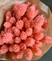 Dried Phalaris-coral