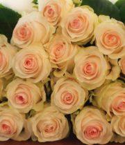 Rose, Seniorita-SA