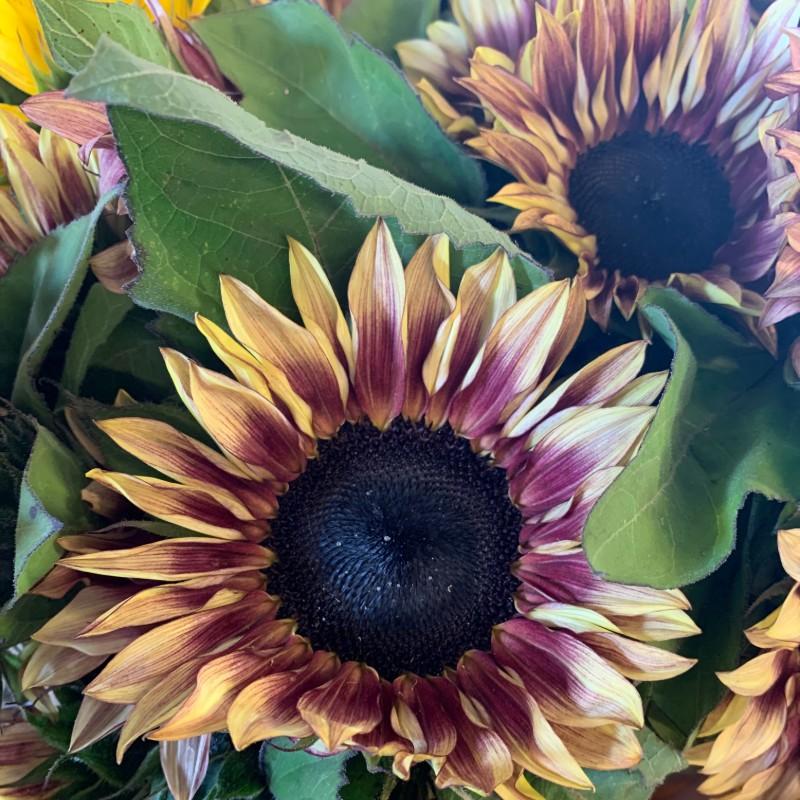 Sunflower Strawberry Blonde