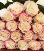 Rose, Sweetness-SA