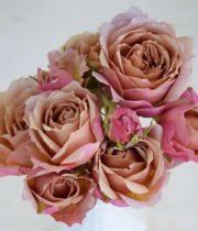 Rose Garden Spray, Wabara Ioli-CA