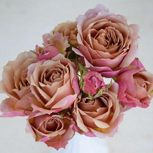 Wabara Ioli Spray Rose