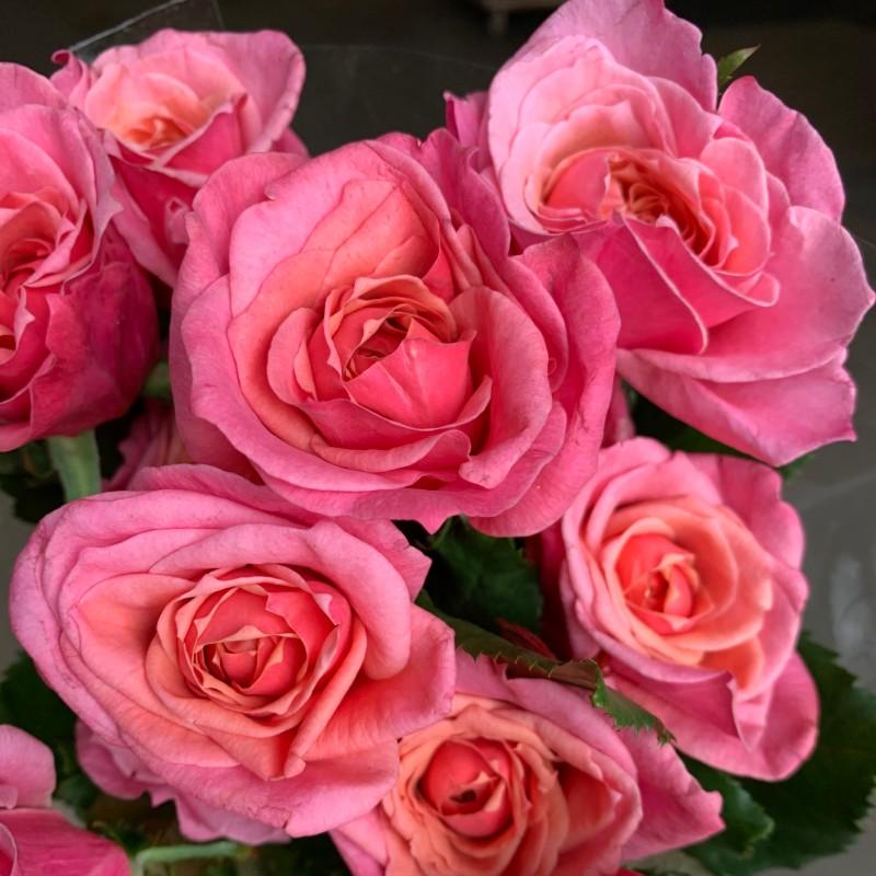 Wabara Miyabi Rose