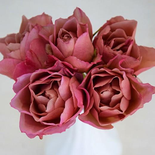 Wabara Sola Rose
