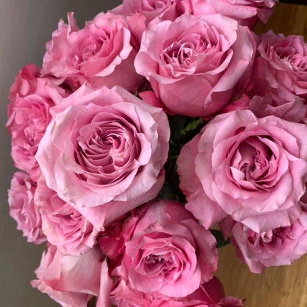 All4Love Rose