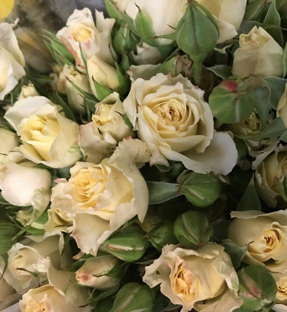 Creamy Bouquet Spray Rose