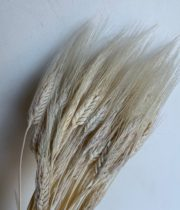 Dried Wheat-bleached