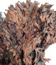 Dried Oak-chocolate