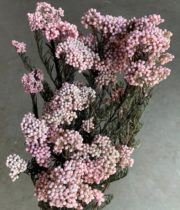 Dried Rice Flower-pink