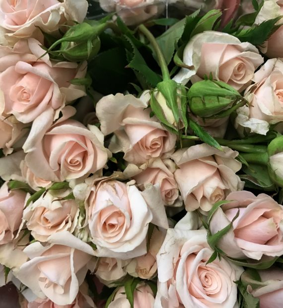 Royal Porcelina Roses