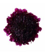 Scabiosa, Red Velvet Scoop-purple