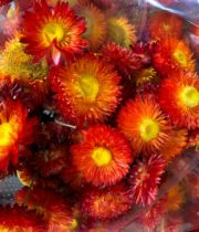 Dried Strawflower-red/orange