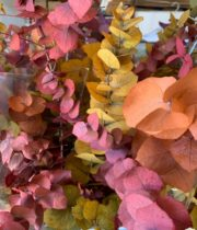 Preserved Fall Stuartiana Eucalyptus